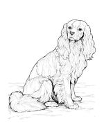 Spaniel-coloring-pages-3