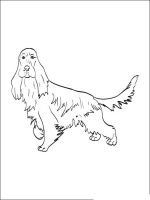 Spaniel-coloring-pages-5