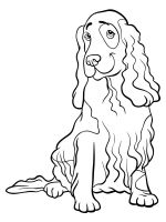 Spaniel-coloring-pages-7