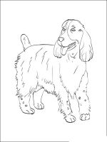 Spaniel-coloring-pages-8