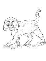 Spaniel-coloring-pages-9