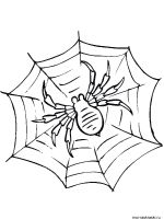 Spider-coloring-pages-14