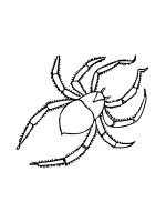 Spider-coloring-pages-37