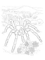 Spider-coloring-pages-42