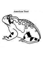 Toad-coloring-pages-2