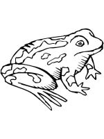 Toad-coloring-pages-5