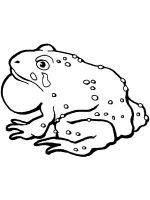 Toad-coloring-pages-9