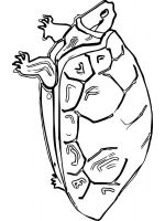 Tortoise-coloring-pages-10