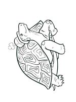 Tortoise-coloring-pages-13