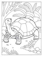 Tortoise-coloring-pages-4
