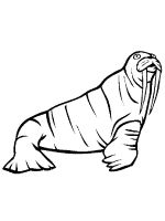 Walrus-coloring-pages-11