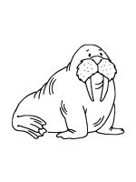 Walrus-coloring-pages-13