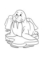 Walrus-coloring-pages-17