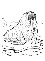 Walrus-coloring-pages-4