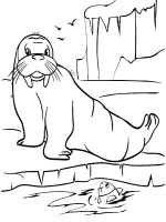 Walrus-coloring-pages-5