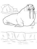 Walrus-coloring-pages-9