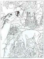 Wild-Animal-coloring-pages-14
