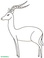 Wild-Animal-coloring-pages-19