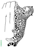 Wild-Animal-coloring-pages-20