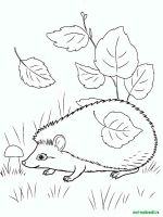 Wild-Animal-coloring-pages-34