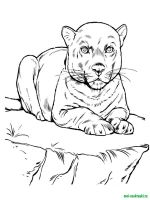 Wild-Animal-coloring-pages-40