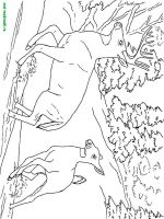 Wild-Animal-coloring-pages-47