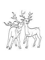 Wild-Animal-coloring-pages-74