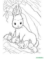 Wild-Animal-coloring-pages-8