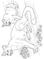 Wild-cats-coloring-pages-13