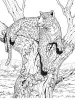 Wild-cats-coloring-pages-2
