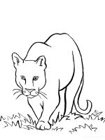 Wild-cats-coloring-pages-21