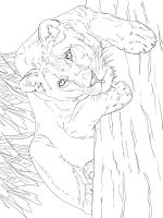 Wild-cats-coloring-pages-24