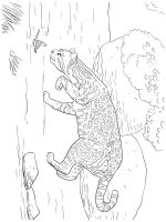 Wild-cats-coloring-pages-25
