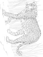 Wild-cats-coloring-pages-26