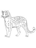 Wild-cats-coloring-pages-27