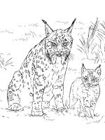 Wild-cats-coloring-pages-29