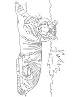 Wild-cats-coloring-pages-34