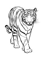 Wild-cats-coloring-pages-35