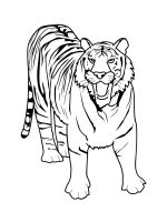 Wild-cats-coloring-pages-36