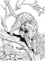 Wild-cats-coloring-pages-6