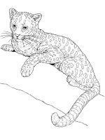 Wild-cats-coloring-pages-7