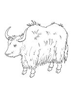 Yak-coloring-pages-2