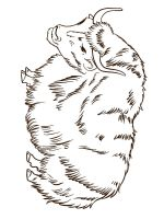 Yak-coloring-pages-6