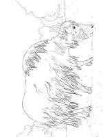 Yak-coloring-pages-8