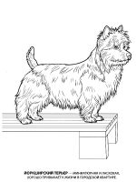 Yorkshire-Terrier-coloring-pages-1