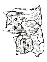 Yorkshire-Terrier-coloring-pages-3