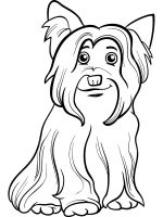 Yorkshire-Terrier-coloring-pages-5