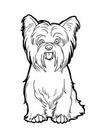Yorkshire-Terrier-coloring-pages-7