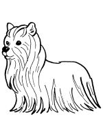Yorkshire-Terrier-coloring-pages-9