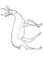 antelope-coloring-pages-15